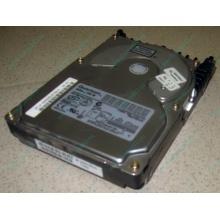 Жесткий диск 18.4Gb Quantum Atlas 10K III U160 SCSI (Кратово)