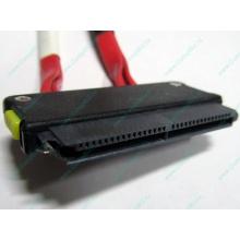 SATA-кабель для корзины HDD HP 451782-001 459190-001 для HP ML310 G5 (Кратово)